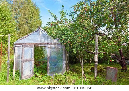 Season of a crop - apples in a garden and tomatoes in a hotbed