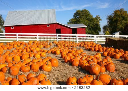 Halloween Pumpkin Farm