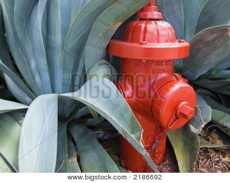 Fire Hydrant - Fire Guard
