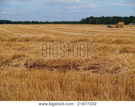 Tractor and Baler in a Field of Freshly cut Wheat.