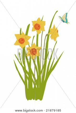 illustration of daffodil plant in bloom with butterfly