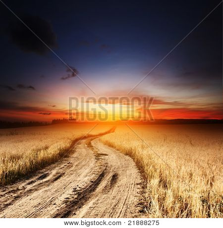 Rural road in field with ripe yellow wheat and sunset
