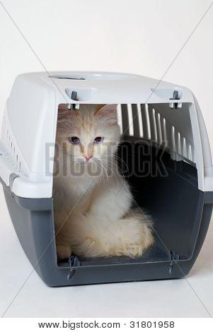 Birman cat in a carrier