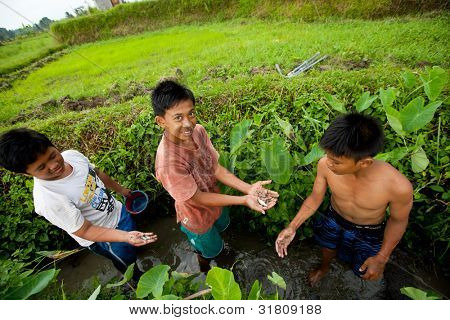 BALI, INDONESIA - MARCH 31: Unidentified poor children catch small fish in a ditch near a rice field on March 31, 2012 on Bali. Daily caloric intake per capita in Indonesia is 2891 kcal per person.
