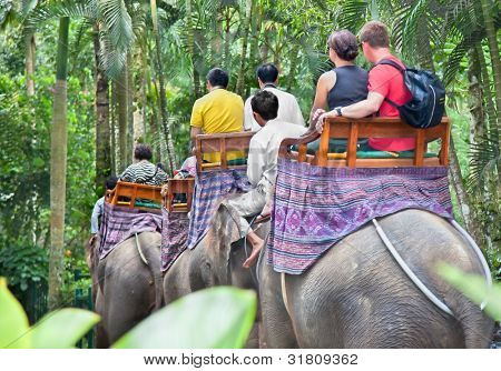 BALI, INDONESIA, JANUARY 24 - Ride elephants throw jungle on January, 24, 2012 in Bali, Indonesia. By riding elephants western tourists help to providing funds for food and land for elephants