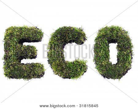 ECO palabra formada de moss aislado en blanco