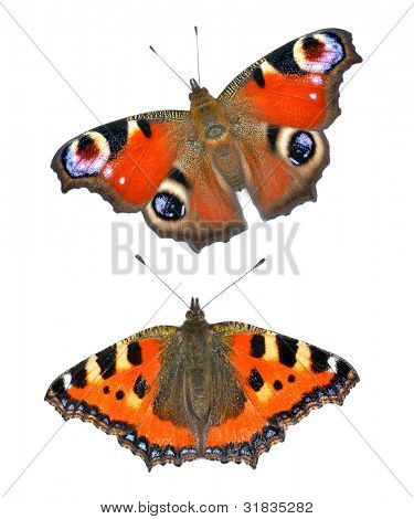 Close up view of the butterflies isolated on white