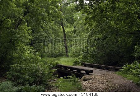 Forest Footbridge