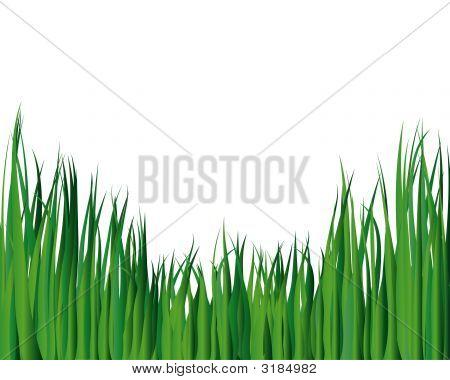 Grass Ornate