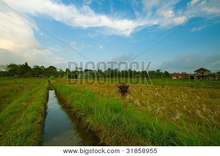 Zanja de riego y terrazas de arroz en los alrededores de Ubud, Isla de Bali, Indonesia.
