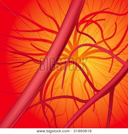 Herz-Kreislauf-System. gerasterte version