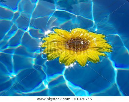 Werden Sie einzelne Blume auf blauem Wasser