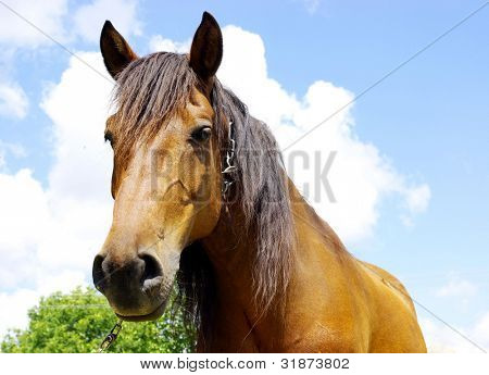 Horse on a background sky