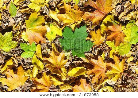 beautiful yellow background of leaves