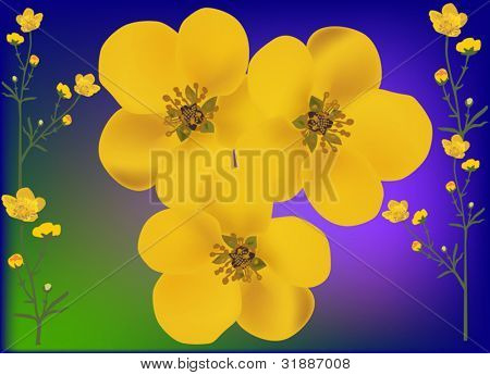 illustration with golden buttercup flowers