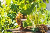 Grape And White Wine. Green Grape And White Wine In Vineyard. Sunny Garden With Vineyard Background, poster
