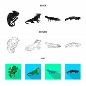 Vector Illustration Of Tail And Fauna Sign. Set Of Tail And Environment Vector Icon For Stock. poster