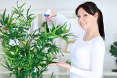 Beautiful woman cares for her flowers in domestic room poster