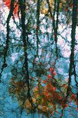 Blurred Reflection Of Colored Autumn Trees In The Cool Blue Water. Picturesque Colorful Leaves, Brig poster