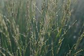 Grass Nature Plant, In Park, Summer, Flora,grass Beside Road, Green Leaves Of Grass In Garden With S poster