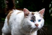 Cat Walking Alone Outside Close Up. Lost White With Brown Spots Kitty On Street Concept. Abandoned S poster
