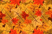 Seamless Pattern Of Autumn Vector Backgrounds, Autumn Background Red Leaves. Autumn Maple Autumn In  poster