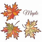 Maple Leaves In Stained Illustration. Maple Leaves. Autumn Design. Forest Themes. Autumn Isolated Le poster