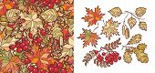 Autumn Leaves Set With Rowan, Maple, Birch And Oak. Fall Leaf Design. Foliage Forest Leaf Vector. Re poster