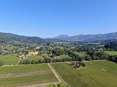 Aerial View Of Vineyard In Napa Valley During Summer Season. Napa County, In Californias Wine Countr poster