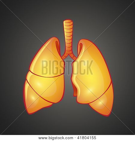 Graphic illustration of human Lungs