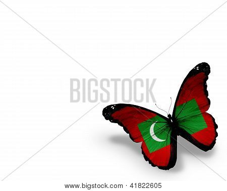 Maldivian Flag Butterfly, Isolated On White Background