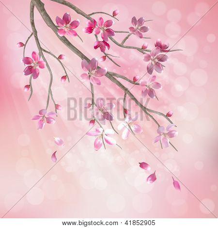 Spring Vector Tree Branch Cherry Blossom Flowers