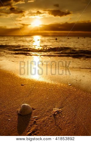 Waves approaching sea shell lying on sand during sunset