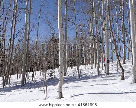 Esquiador downhill mulher