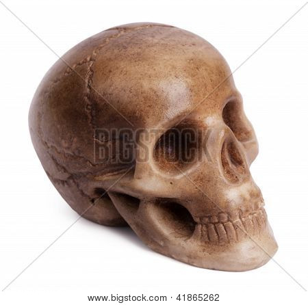 Plaster Cast Of A Human Skull