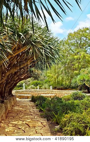 Beautiful Rothschild Gardens (park Ramat Hanadiv)