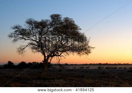 Sunset At The Waterhole At The Okaukeujo Rest Camp, Etosha National Park, Namibia