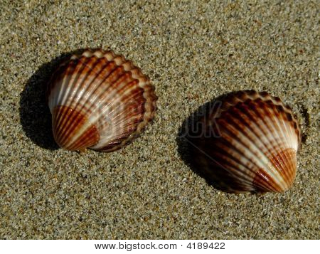 Shells On The Sandy Beach