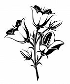image of harebell  - Vector illustration of  black silhouette of bluebells on a white background - JPG