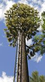 stock photo of dork  - Mobile telephone communication aerial mast made to look like a pine tree - JPG