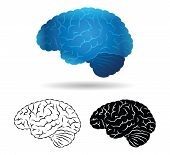 pic of cerebrum  - Brain illustrations in blue - JPG
