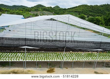 Hydroponic Vegetables Farm