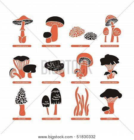 Edible Mushrooms Set
