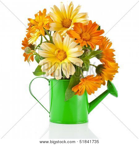 orange flower bouquet of calendula in a watering can Isolated on white background