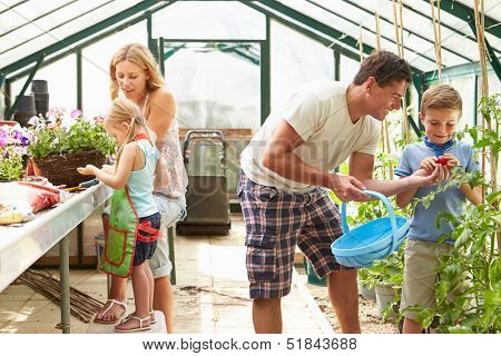 Family Working Together In Greenhouse