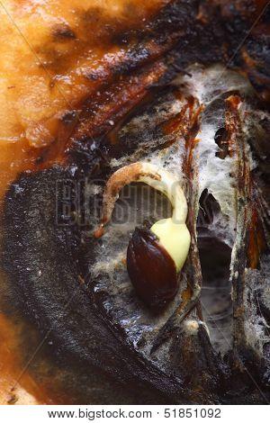 Closeup Rotten Apple Halves. Food Waste.