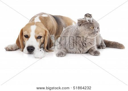 Dog, Cat And Hamster