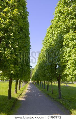 Avenue With The Big Green Trees