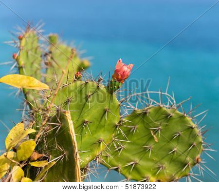 Cactus With Red Flower