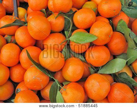 Clementine-Orange